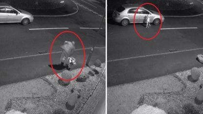 VIDEO. Beelden tonen hoe man hond dumpt langs weg en hoe dier wanhopig weer in wagen probeert te raken. En nu wil iedereen hem adopteren