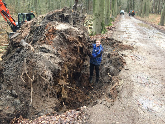 Bij de Nieuwe Hoef op landgoed Gorp en Roovert nam een omgewaaide boom een stuk van de weg mee.