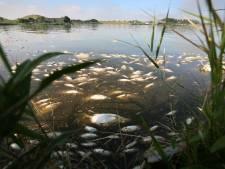 Wanbeleid leidde tot ruim 60.000 dode vissen in Oostvaardersplassen: 'Het vertrouwen is weg'