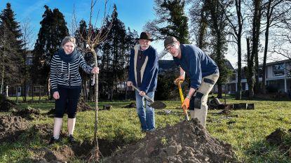 Nieuwe bomen en hagen voor vrije basisschool Dorp