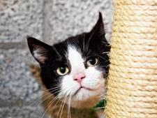 Katten jagen inbreker het huis uit in Harderwijk