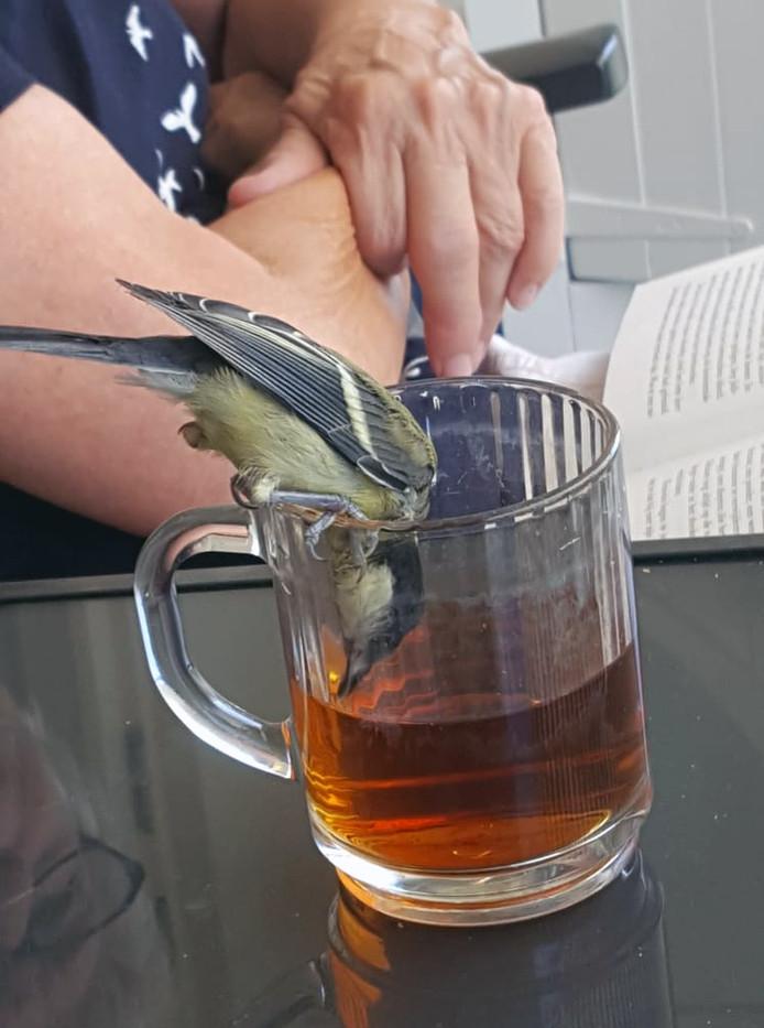 Je zal als koolmees door de hitte maar dorst hebben. Dan durf je zelfs een slokje thee te drinken uit een glas.
