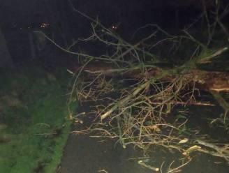 Brandweer ruimt omgewaaide boom en afgerukte takken