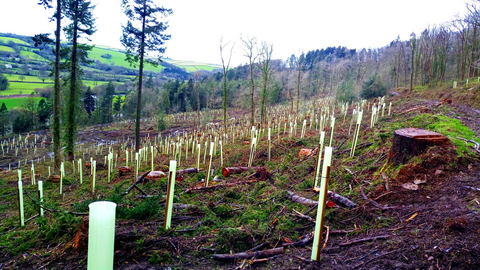 Aanplant van duurzaam loofboos in Groot-Brittannië