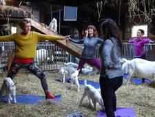 Yogales met een geitje op je rug