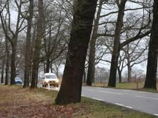 Voorlopig minder bomen tegen vlakte langs kanaal in Brummen