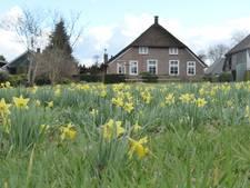 Bollenbank moet wilde narcis voor Staphorst behouden