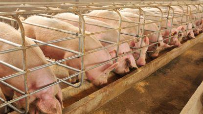 Helft veehouders leeft uitstootnormen niet na