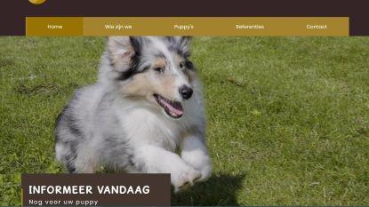 """Uitbater hondenkwekerij Just Baby Dogs: """"Sommige klagers hebben zélf niet voor hun honden gezorgd"""""""