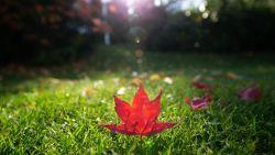 """KMI: """"Oktober telde uitzonderlijk veel lente- en zomerdagen"""""""