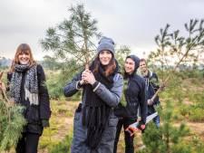 Kerstbomenverkoop piekt dit weekend: 'Gelukkig krijgen we geen witte kerst'