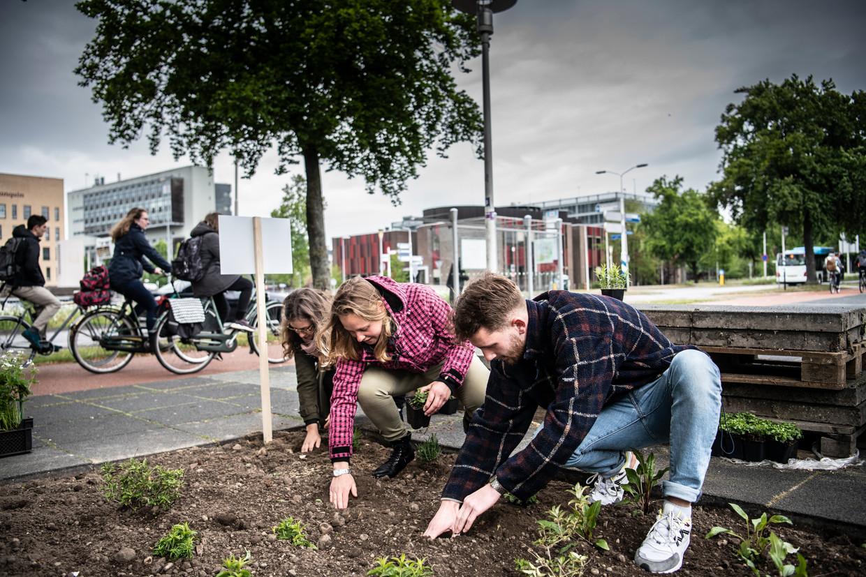 Studenten planten plantjes waar eerst stenen lagen bij de Universiteit Nijmegen. Beeld Koen Verheijden