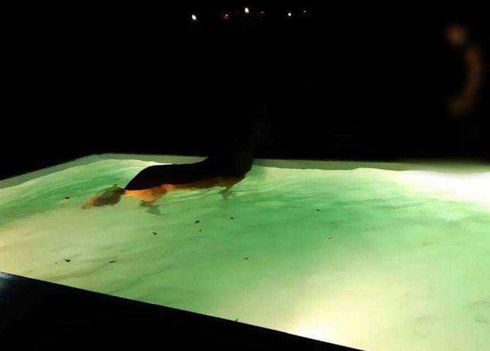 paard zwembad limburg brandweer
