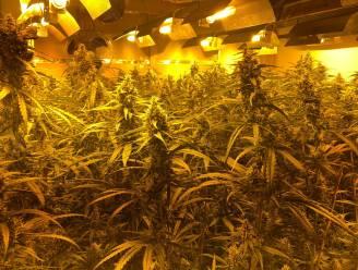 Tot 30 maanden cel voor cannabiskwekende buren uit Assenede