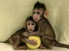 Twintig jaar na schaap Dolly: Chinezen klonen voor het eerst apen
