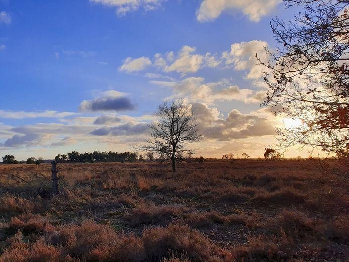 Strabrechtse Heide (lezersfoto).