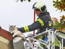 Poes Prinses Leia maakt het bont: 11 brandweermannen in actie om haar te redden