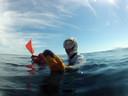 Duiker met een zee-egel, foto ter illustratie