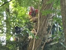 Kat 'fopt' brandweer en verlaat zelfstandig de boom