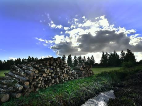 Coöperatie wil naast windmolens bouwen ook voedselbos aanleggen