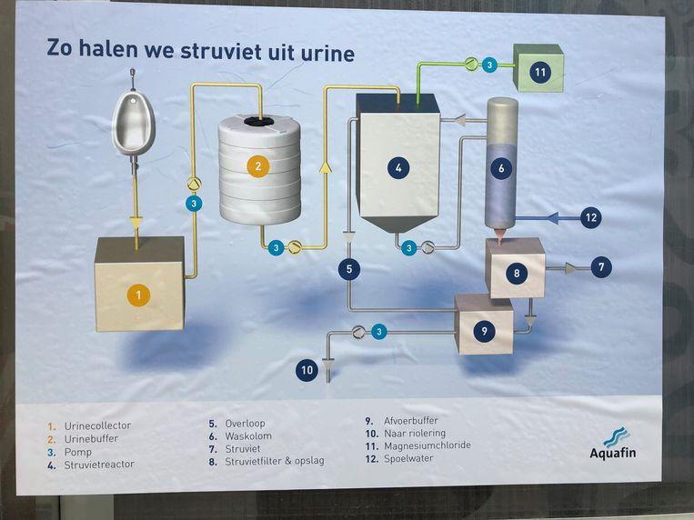 Zo wordt het struviet uit de urine gehaald.