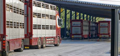 Partij voor de Dieren: 'Gegoochel met cijfers stikstofuitstoot Vion'