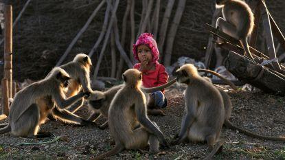 Net als Mowgli: peuter (2) leeft elke dag tussen de apen