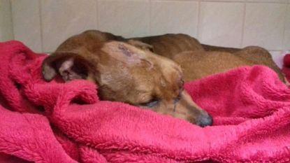 Beul bewerkt hond met schroevendraaier en zet hem vervolgens levend in brand