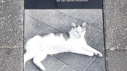 """'Sammie de supermarktkat' krijgt gedenkteken: """"Hier lag hij altijd in de weg"""""""