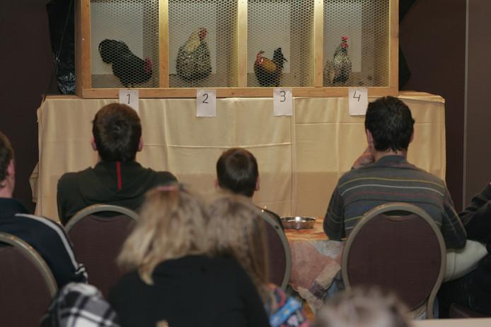 Sfeerbeeld van een hanenkraaiwedstrijd in zaal IJsseldijk op de Boskamp.