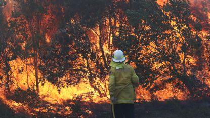 """Bosbranden Australië breiden razendsnel uit: """"Zelfs Sydney komt in gevarenzone"""""""