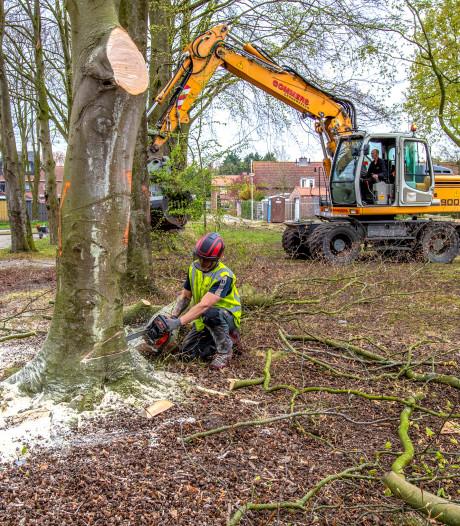 Bijl in 45 bomen in Welberg