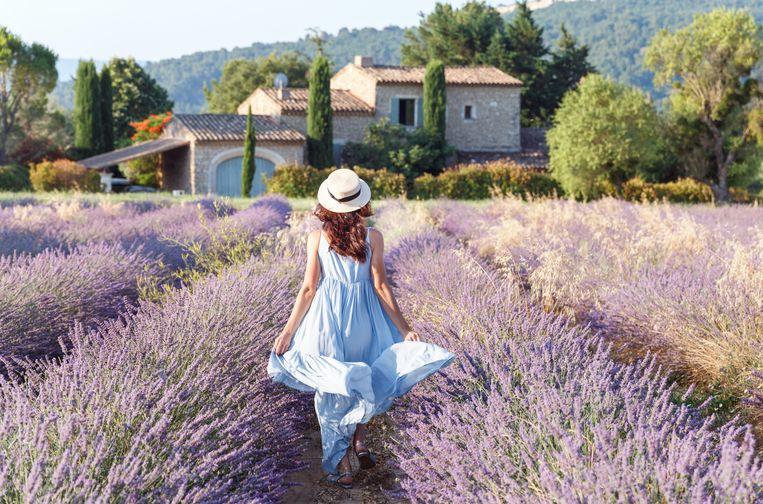 Een lavendelveld in de Franse Provence.