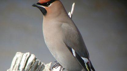 Vogelbeurs in Saviocentrum