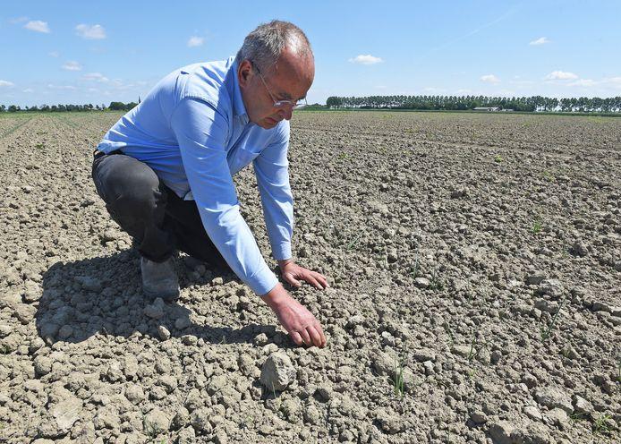 Landbouwer Frank Kuijpers uit Ossenisse bekijkt de droogte op zijn uienveld. Zoet water
