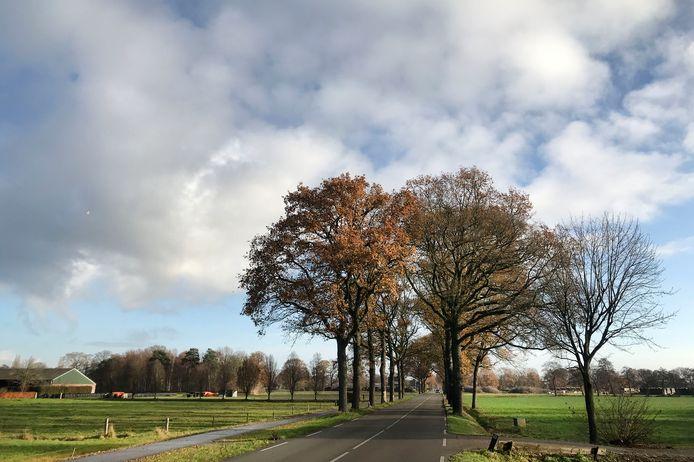 De provincie Gelderland wil in totaal 178 bomen langs de Haaksbergseweg tussen Neede en de nieuwe N18 kappen, om de N315 te kunnen verbreden.