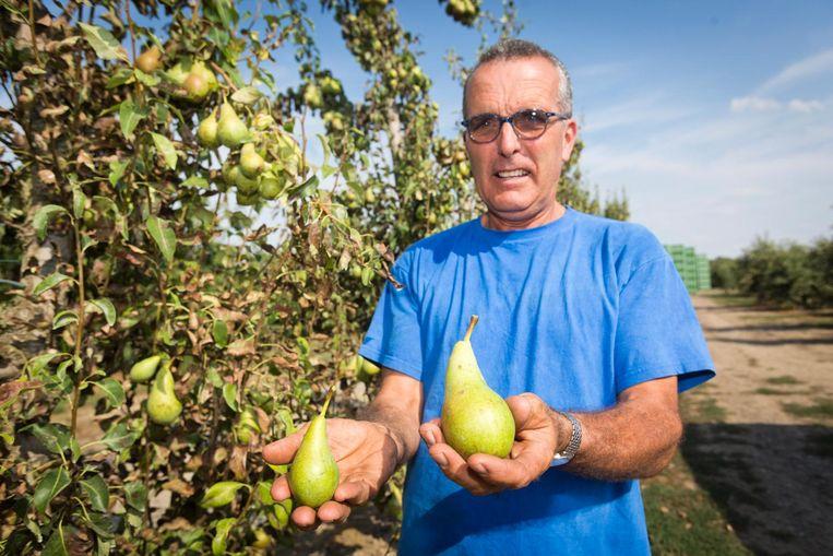 """""""Gebruik toch eens uw gezond boerenverstand"""", zegt fruitteler Theo Billen uit Ordingen."""