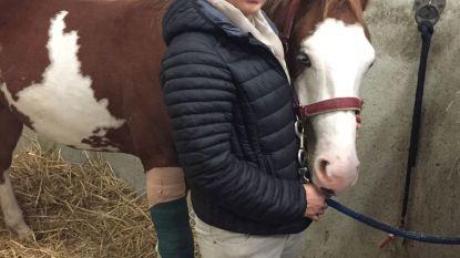 Motorcrossers in Clauterbos: opgejaagd paard zwaargewond