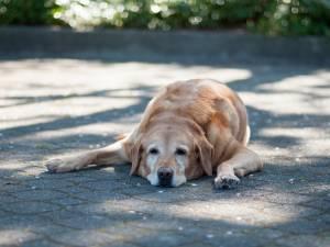 Comment aider nos animaux à mieux supporter les fortes chaleurs