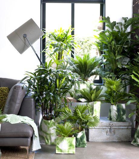 Maak van je woonkamer een jungle met deze onverwoestbare planten