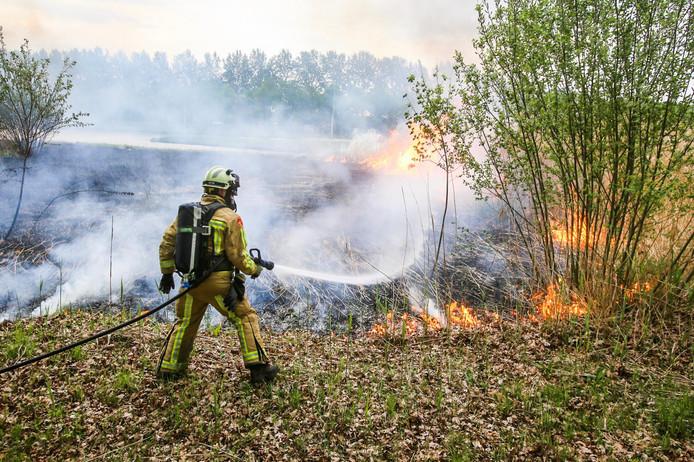 Groot stuk riet in brand in Helmond.