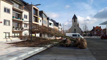 Bomen van 5 jaar oud zorgen voor instant effect op promenade