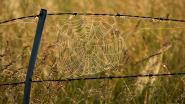 Spinnen zijn weer actiever: 4 tips om ze te weren