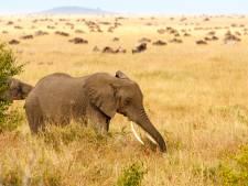 La chasse de l'éléphant de plus de 50 ans par un touriste était légale
