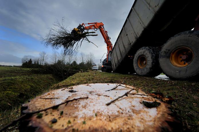 In de Bernardstraat verdwenen in 2016 bomen voor de aanleg van de randweg.