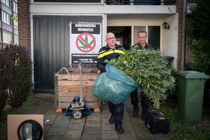 Wijkagent Jan Visser van Presikhaaf en coördinator hennep Dennis van Aken halen tijdens de ruimdag wietplanten uit een woning aan de Houtmanstraat.