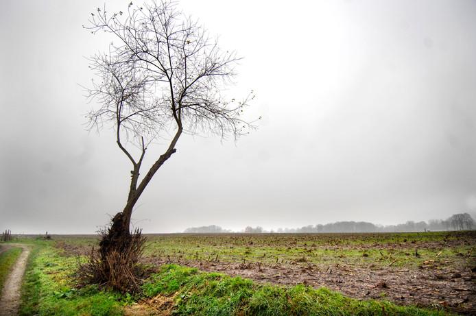 De gevolgen van de uitspraak over de aanpak van stikstof zorgt in Tubbergen voor veel onzekerheid.