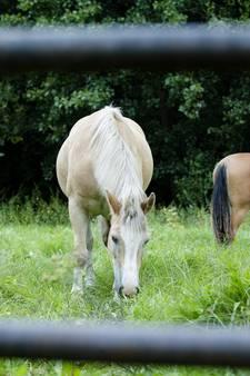 Gevaarlijk paardenvirus geconstateerd vlak over de grens