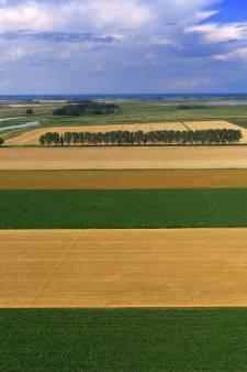 In de Noordwaard ligt een lappendeken van bietenakkers en aardappelvelden
