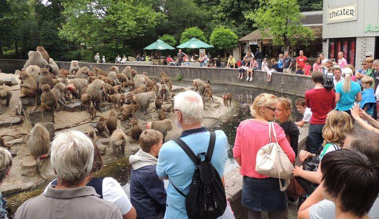 Mantelbavianen en andere apen in Dierenpark Emmen Beeld Novum / Harm Meter